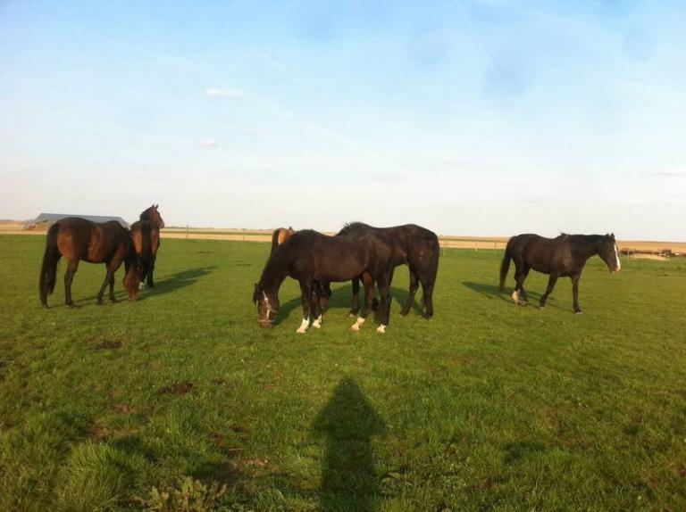 Visite au troupeau