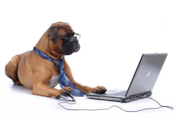 Dog at laptop resized 600